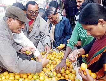 জলপাইগুড়িতে কমলা লেবু কেনার হিড়িক। ছবি: সন্দীপ পাল।