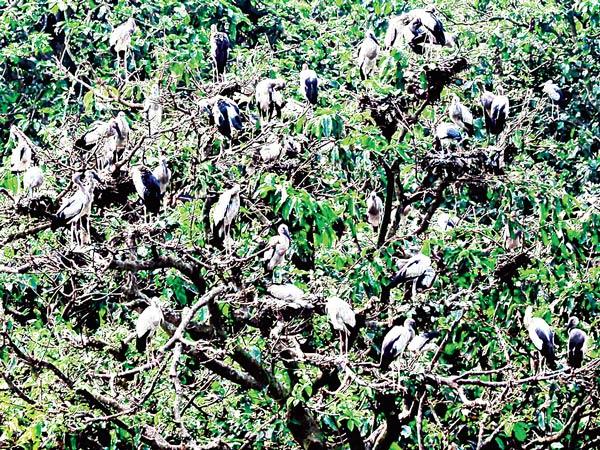 পরিযায়ী: কুলিকে পরিযায়ী পাখির দল। ফাইল চিত্র
