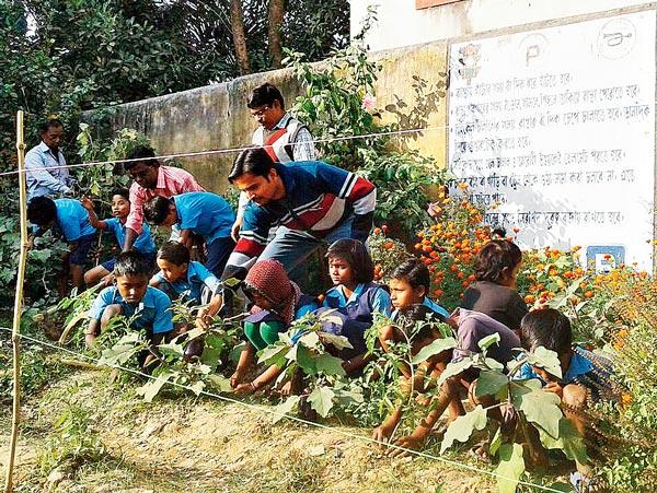 ফসল: স্কুলের বাগানে পড়ুয়া, শিক্ষকেরা। লাভপুরের ইন্দাস প্রাথমিক বিদ্যালয়ে। নিজস্ব চিত্র