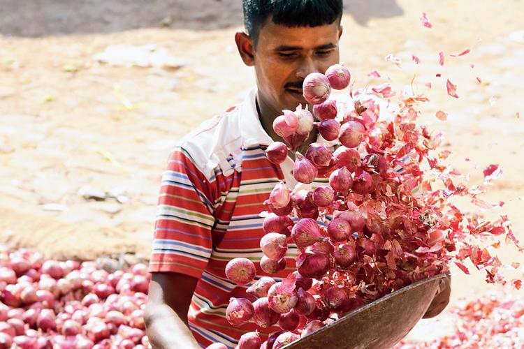পেঁয়াজের-যত্ন: বহরমপুরের নতুনবাজারে। ছবি: গৌতম প্রামাণিক