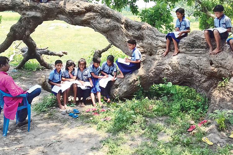 অভিনব: গাছের ছায়ায় বসেই চলছে ক্লাস। দেগঙ্গার নছিমপুর প্রাথমিক বিদ্যালয়ে। ছবি: সজলকুমার চট্টোপাধ্যায়