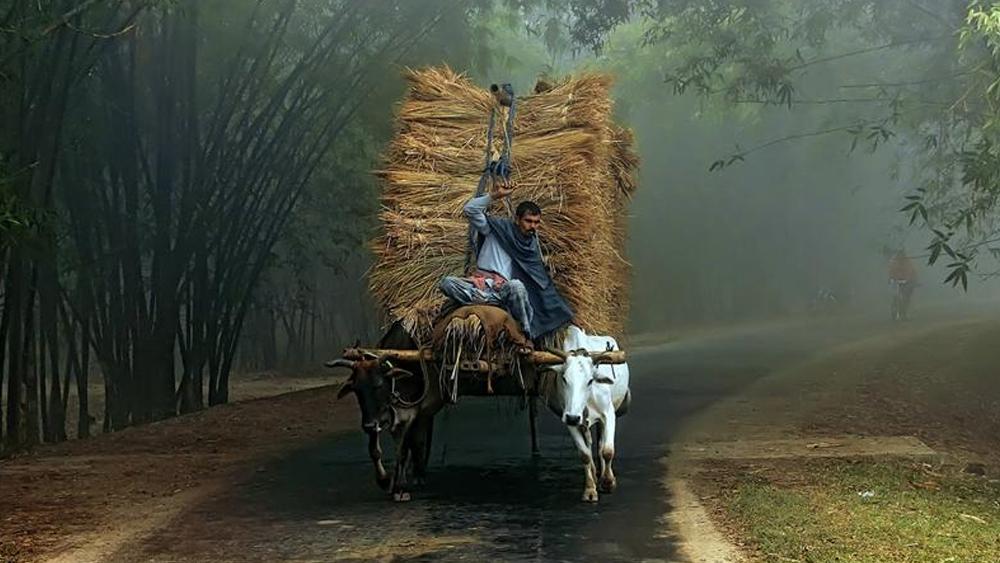 সকালের ঘন কুয়াশা কেটে বেলায় রোদের দেখা মিলবে, উত্তরবঙ্গে চলবে বৃষ্টিপাত। ছবি: শাটারস্টক।