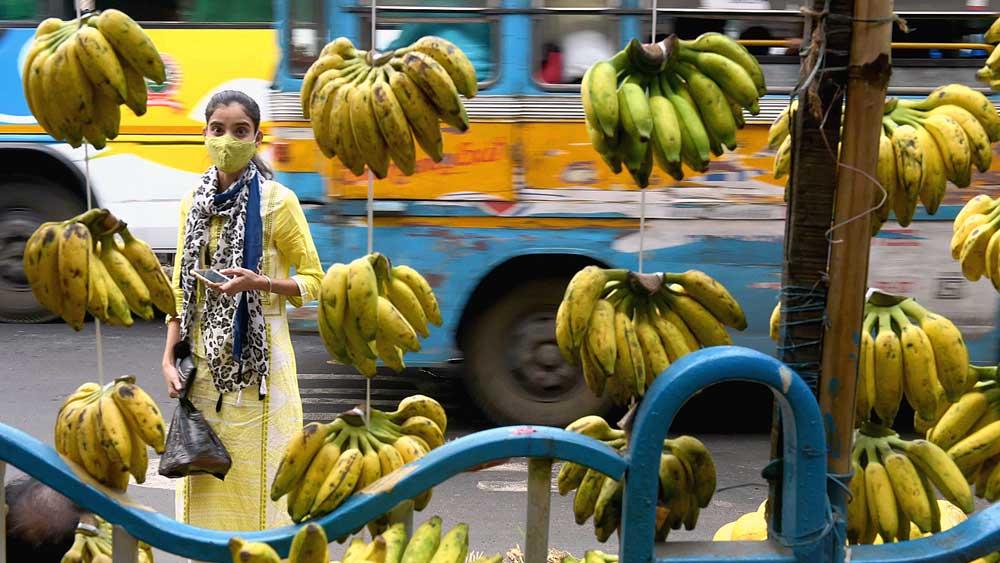 তোড়জোড়: ছটপুজো উপলক্ষে রাস্তার উপরেই চলছে কলা বিক্রি। বুধবার, জানবাজারে। ছবি: সুদীপ্ত ভৌমিক