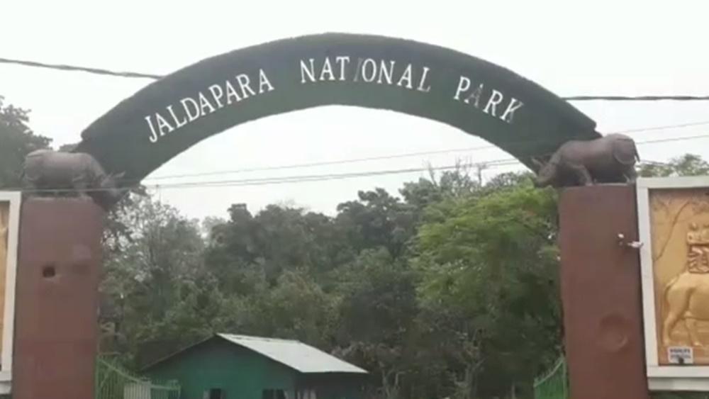 জলদাপাড়া জাতীয় উদ্যান। নিজস্ব চিত্র।