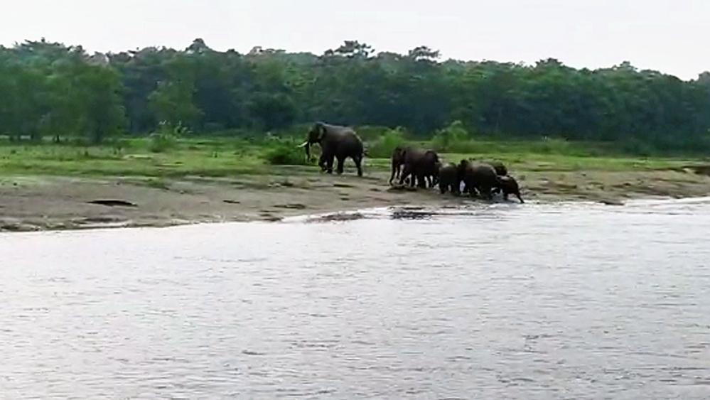 সার বেঁধে: ছিপড়া গ্রামের রায়ডাক নদীর পাড়ে বুনো হাতির দল। বুধবার সকাল। নিজস্ব চিত্র