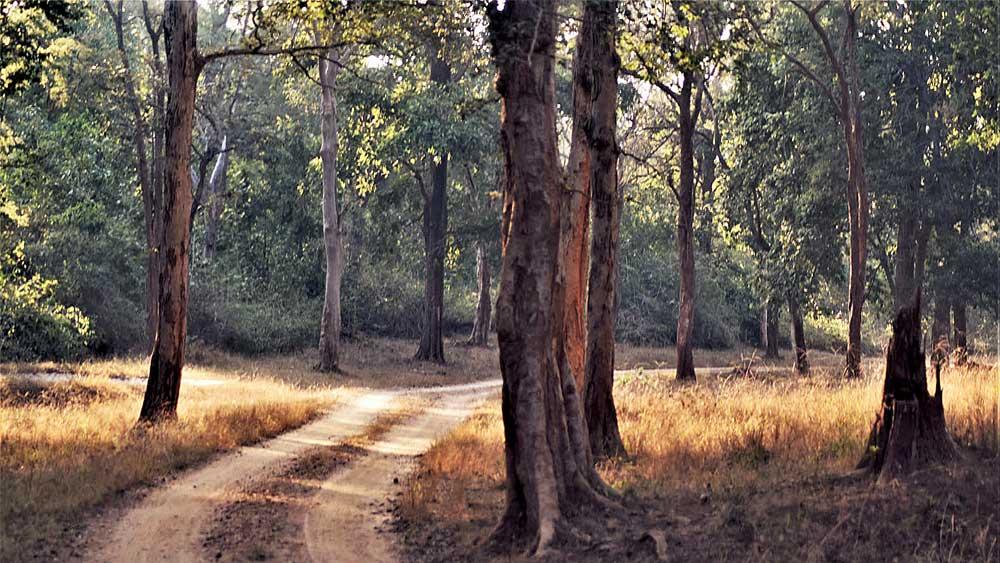 জাঙ্গাল: মারোমার যাওয়ার পথে