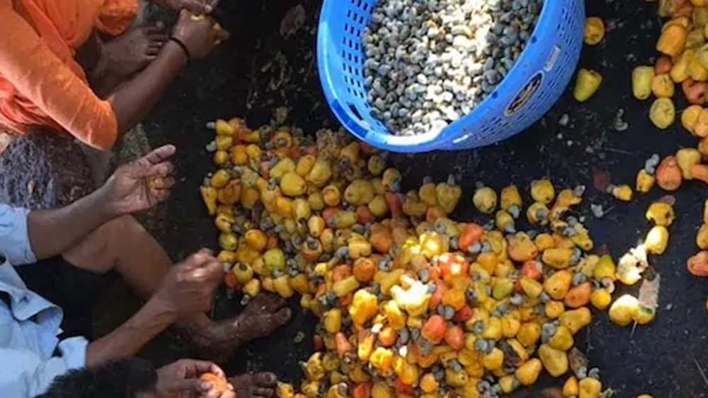 মূলত ২ ধরনের ফেনি রয়েছে। কাজু ফেনি এবং তাল ফেনি। কাজু ফেনি সবচেয়ে জনপ্রিয়।