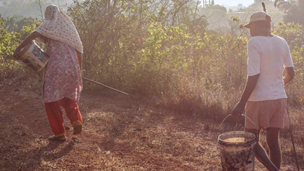 রোজ সকাল হলেই একটি ঝোড়া নিয়ে কাজু বাগানে চলে যান তাঁরা। মাটিতে পড়ে থাকা পাকা কাজু ফল সংগ্রহ করে বাড়ি ফেরেন। তারপর ফলের মুখে লেগে থাকা বীজ (বাদাম) ছাড়িয়ে অন্য পাত্রে সংগ্রহ করে নেন। পরে সেই বাদামগুলিকে বিক্রি করে দেন। এবার ফলগুলিকে পিষে তার রস বার করে এক পাত্রে জমা করেন।