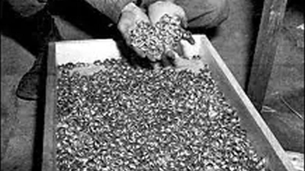 দক্ষিণ পোল্যান্ডের মিনকওস্কিইয়ে রয়েছে ওই প্রাসাদ। এই প্রাসাদ ১৮ শতকের। সাবেক প্রাশিয়ার জেনারেল ফ্রেডরিখ ভিলহেল্ম ভন সেদলিৎজ এটি বানিয়েছিলেন।