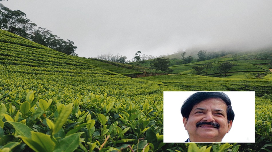 The focus will be on experiential tourism such as tea plucking, says (inset) Vinod  Zutshi. PHOTO: Unsplash