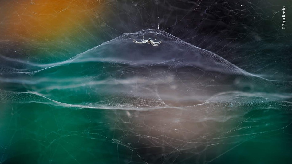 Hebbar's Image shows a tent spider in its web in a dome shape with the backdrop of an autorickshaw.  Image source: Facebook