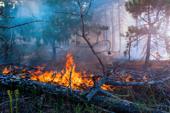 The half-burnt body of the woman was found on Thursday from Tiriltoli forest in Kalamati