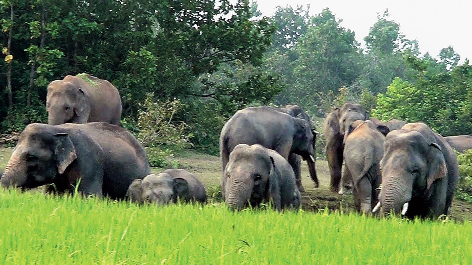 Elephants at a forest in Odisha.