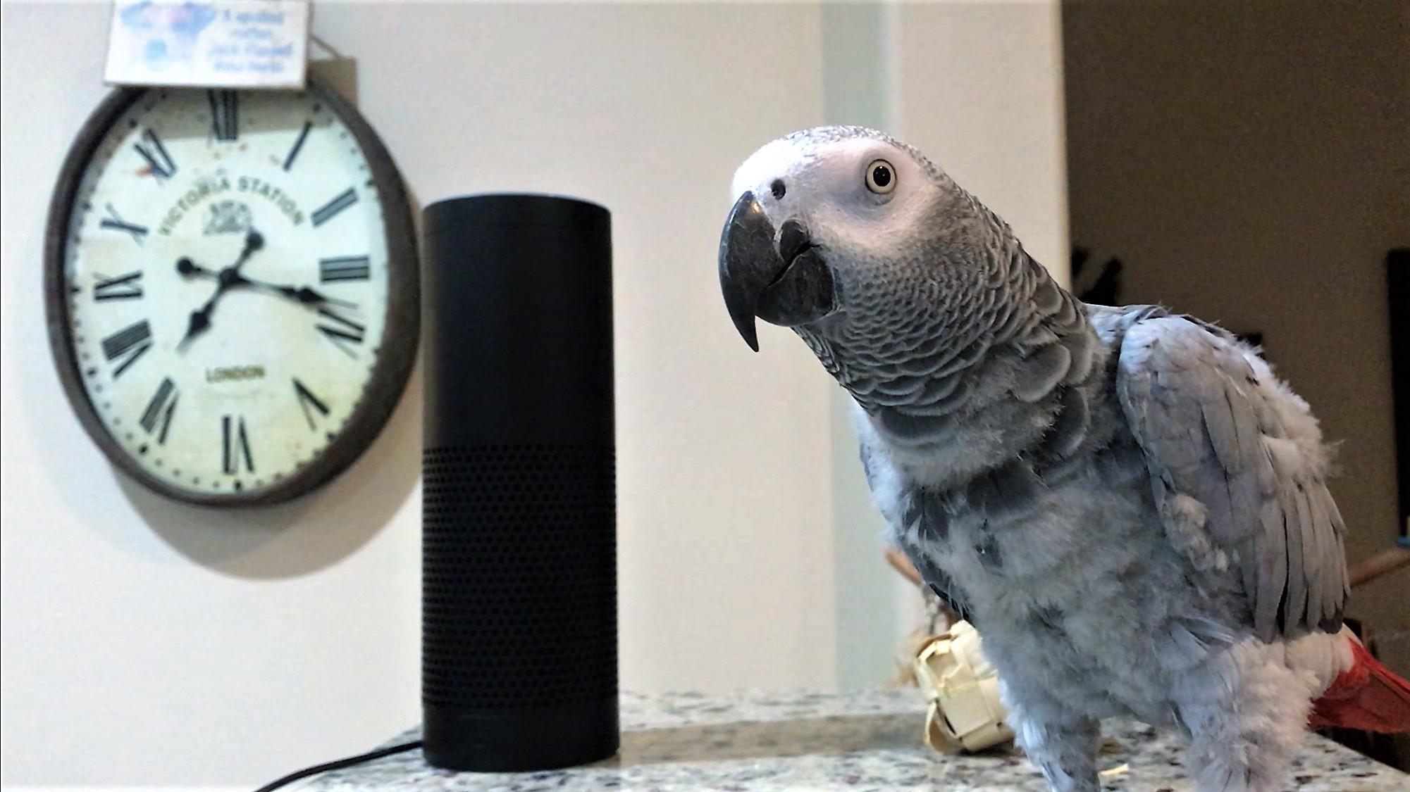 These days even pets have competition where obeying voice commands are concerned