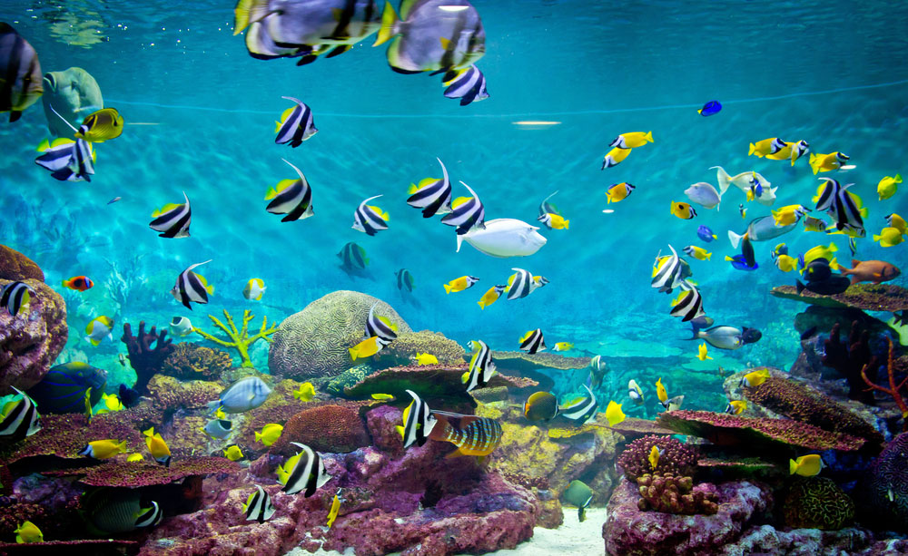 Many species of fish might go extinct as the oxygen levels in the oceans decrease owing to rising temperatures