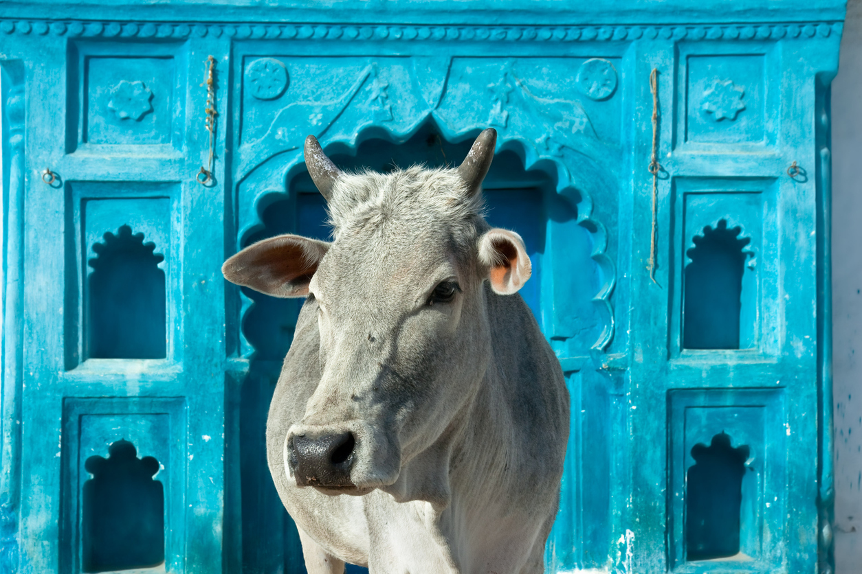 Our breed wants Modiji to stay in power... until the cows come home, so to speak.