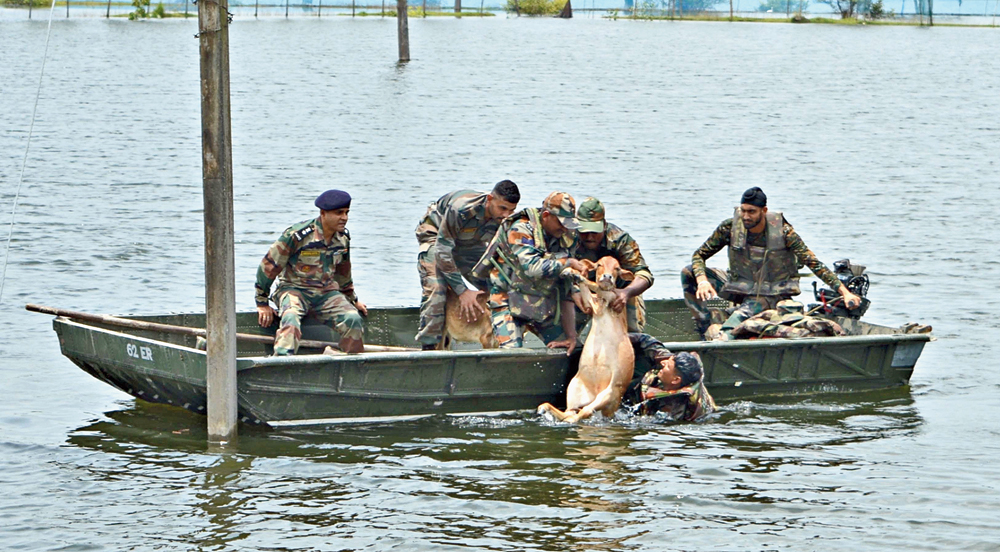 Army personnel rescue a calf from a flood-affected village in Barpeta district