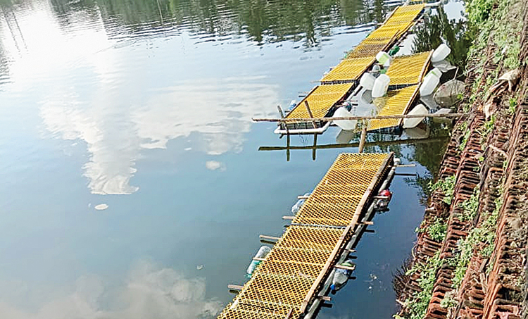 Boxes containing crabs kept afloat with the help of empty bottles in a Contai pond