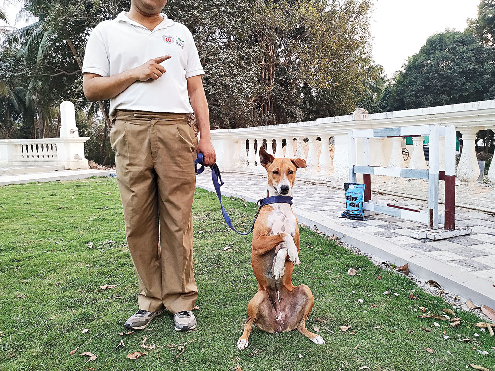 Asha, the police dog