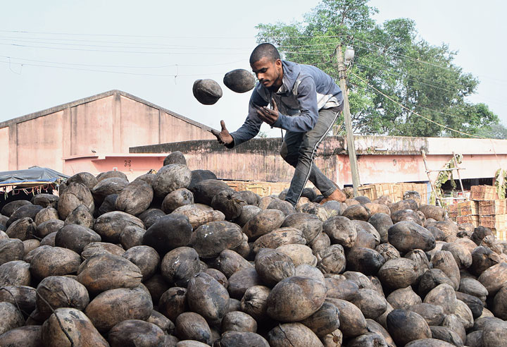 Coconuts being unloaded at a wholesale market in Dhanbad on Wednesday for sale during Chhath