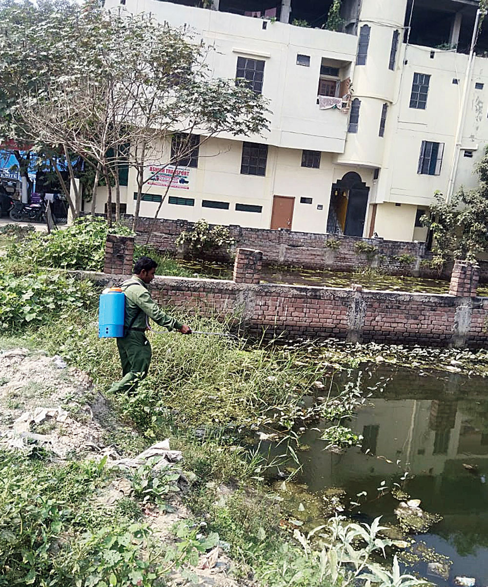A PMC worker conducts anti-larvae treatment at an area in Bankipore circle on Monday