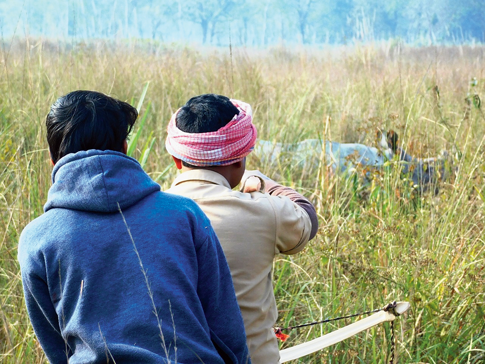 Forest guards in Jaldapara prepare to dart a rhino with arrows fixed with red markers for identification after vaccination