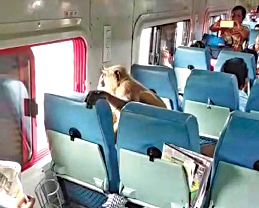 On a recent train journey, a gentlemanly simian on board did not bother any of his co-passengers