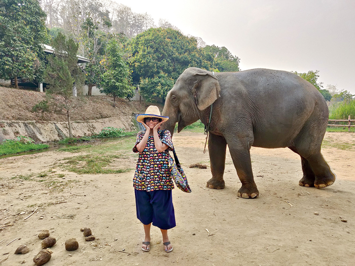 An ethical elephant orphanage in Thailand where the animals have been rescued from circuses and zoos and are taken care of without being chained