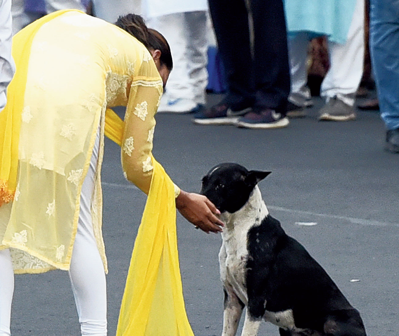 Jadavpur Trinamul candidate Mimi Chakraborty pets a dog during the road show