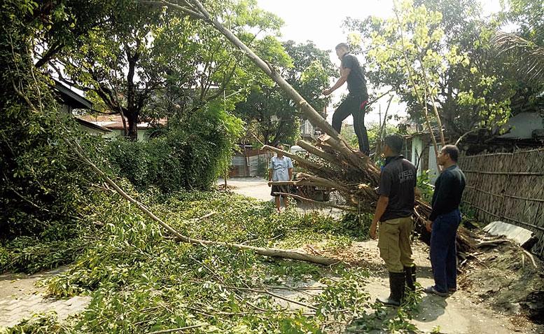 SDRF personnel cut a fallen tree in Guwahati on Friday.