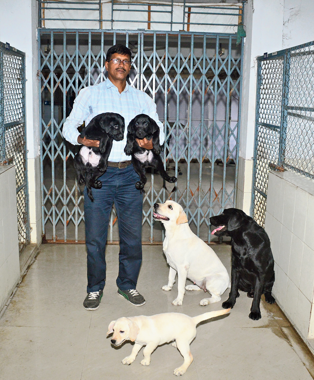 Trainer Swapan Dey with puppies and their parents at West Bengal University of Animal and Fishery Sciences