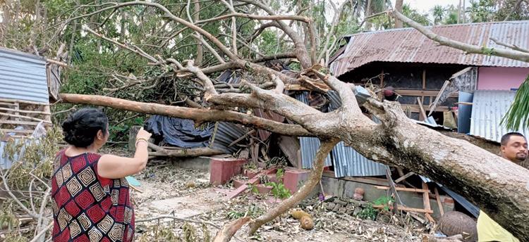 The tree that fell on Nibedita Dutta's house in Thakurnagar.