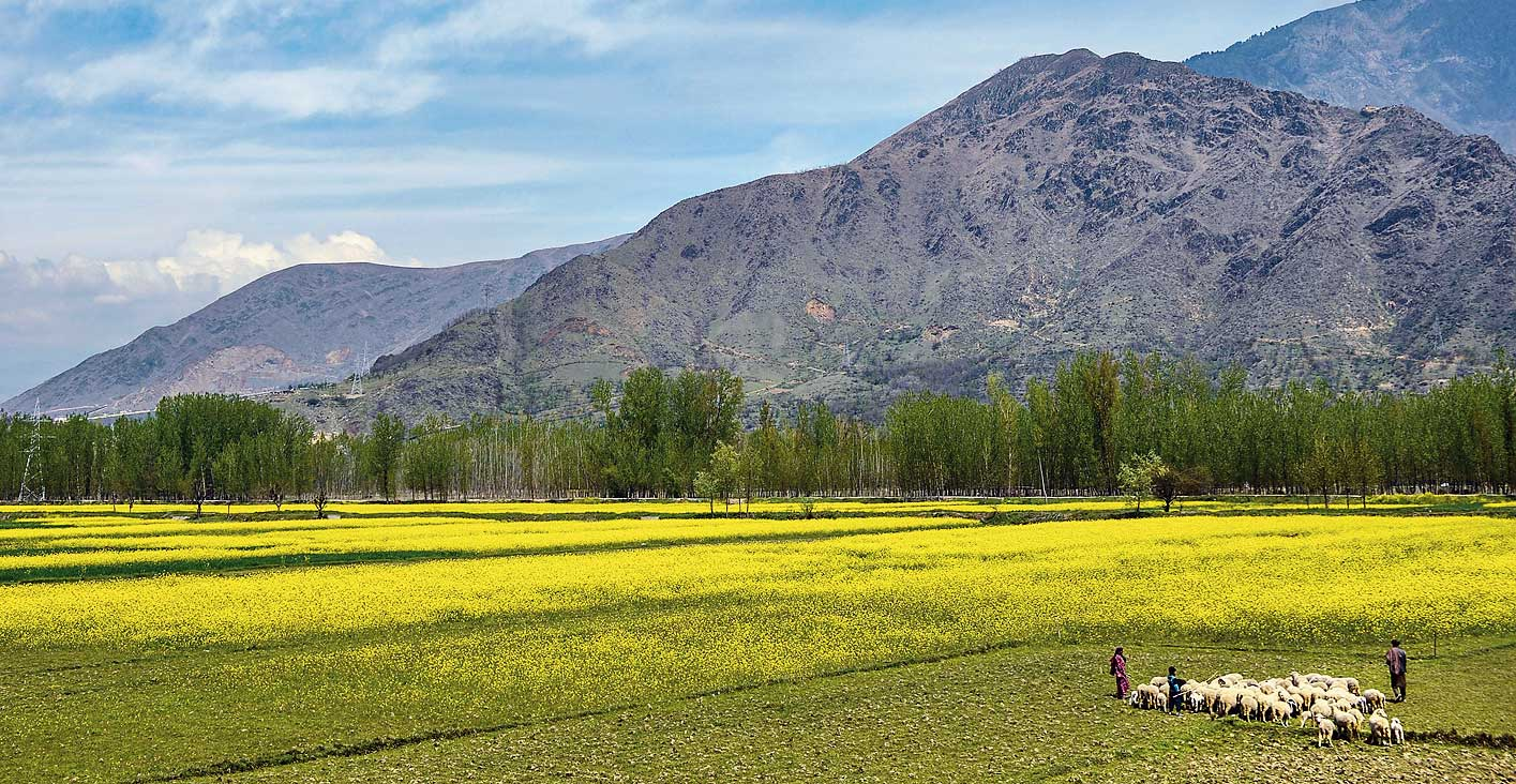 A nomadic Gujjar family leads their flock of sheep towards a field in Srinagar on Saturday.