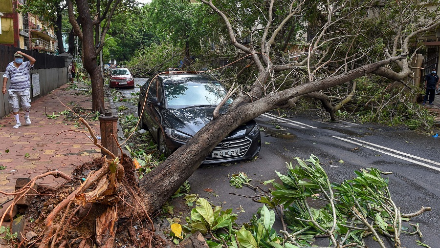 A man walks towards an uprooted tree, following heavy rainfall, at Marine Drive on Thursday