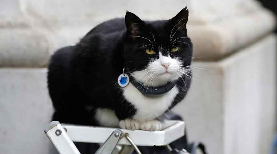 In this file photo dated Tuesday, Feb. 12, 2019, Palmerston, the Foreign Office cat sits on a photographer's ladder at Downing Street in London.