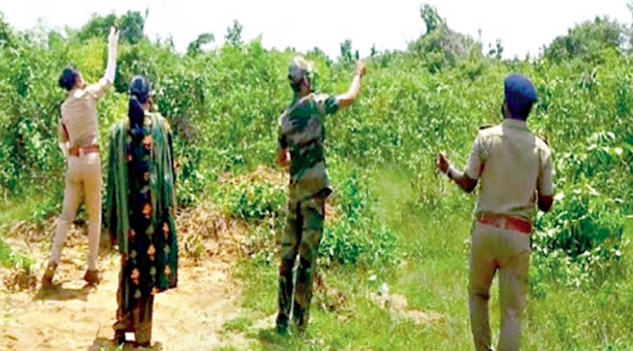 Forest officials throw seed balls in a forest area in Athagarh, Odisha.