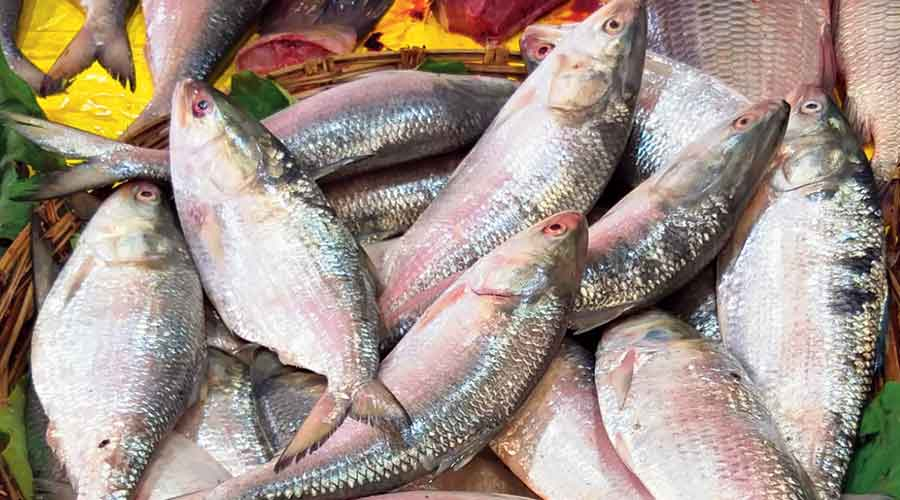 The hilsa at the Haldia fish market in East Midnapore