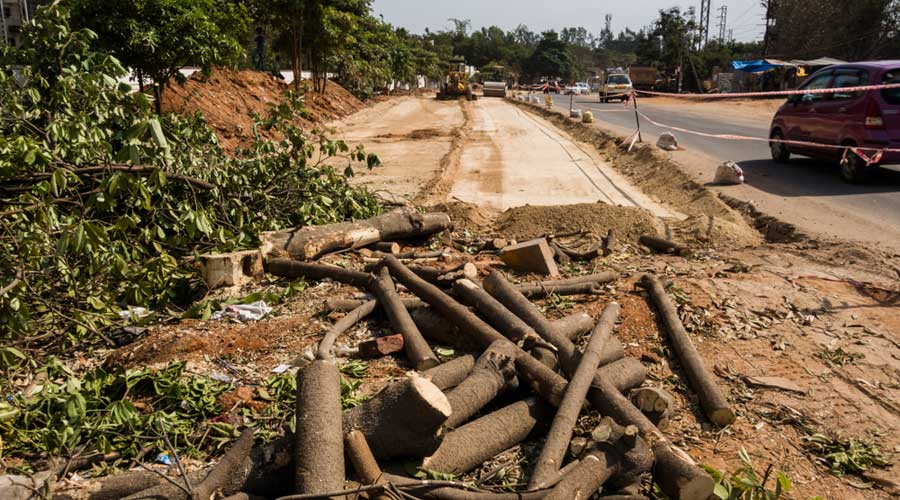 Trees that have been chopped as part of a highway-widening project in Hyderabad.