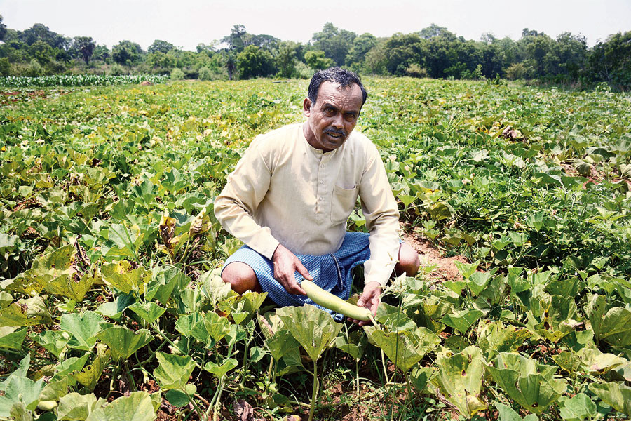 A vegetable farmer at Patamda near Jamshedpur.