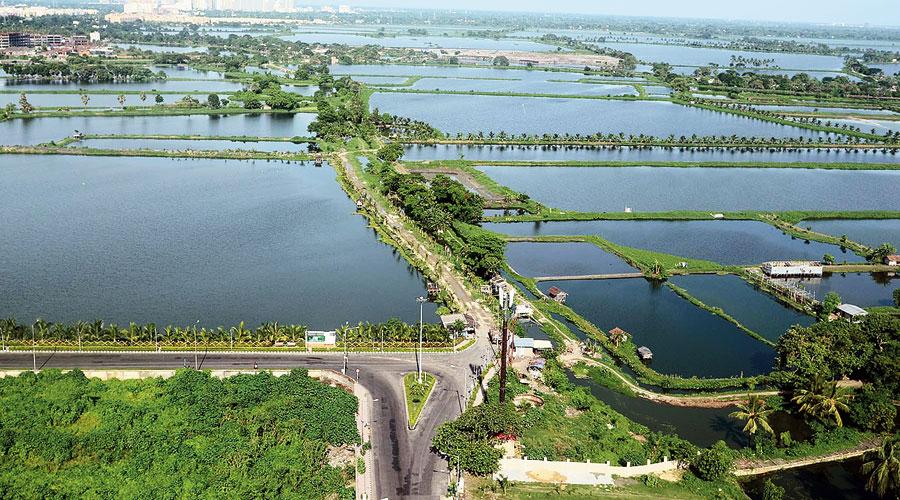 The East Calcutta Wetlands as seen behind Sector V