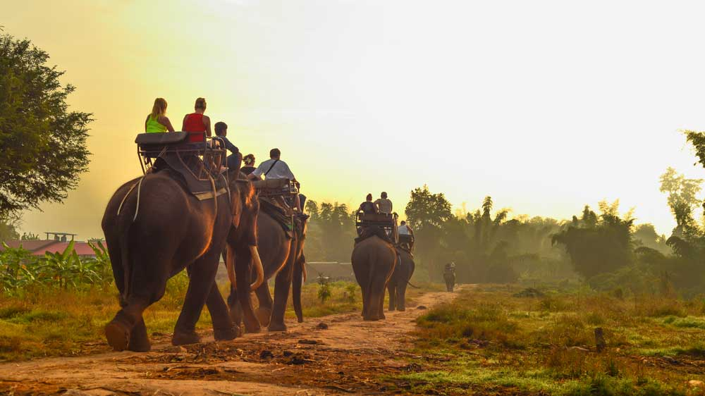 A report revealed that India is home to the second highest number of elephants used for tourism.