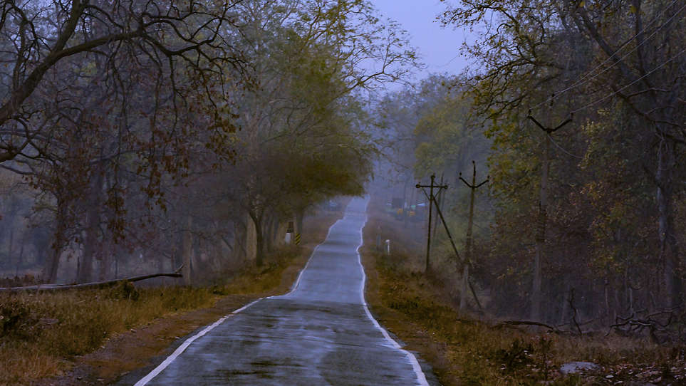 Road in the forest, Tadoba Andhari Tiger Reserve.
