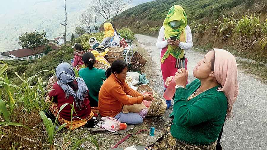 Women workers take rest after plucking of tea leaves in a garden in the Darjeeling hills. The workers of closed tea estates said the halt in the aid worsened their distress amid the pandemic for two reasons.