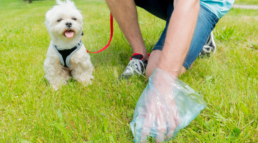 Many owners act responsibly and carry poop pickers when they take their pets out for a walk, a pet owner said. Poop pickers or poop scoopers are available for Rs 495-Rs 599 on some e-commerce websites.