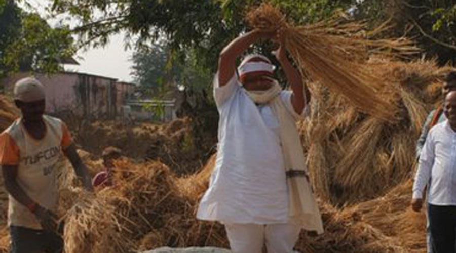 Agriculture minister Badal Patralekh working on a field at a village in Deoghar on Monday.