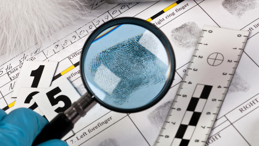 Most forensic scientists actually have a graduate degree in pure sciences and a postgraduate degree in forensics