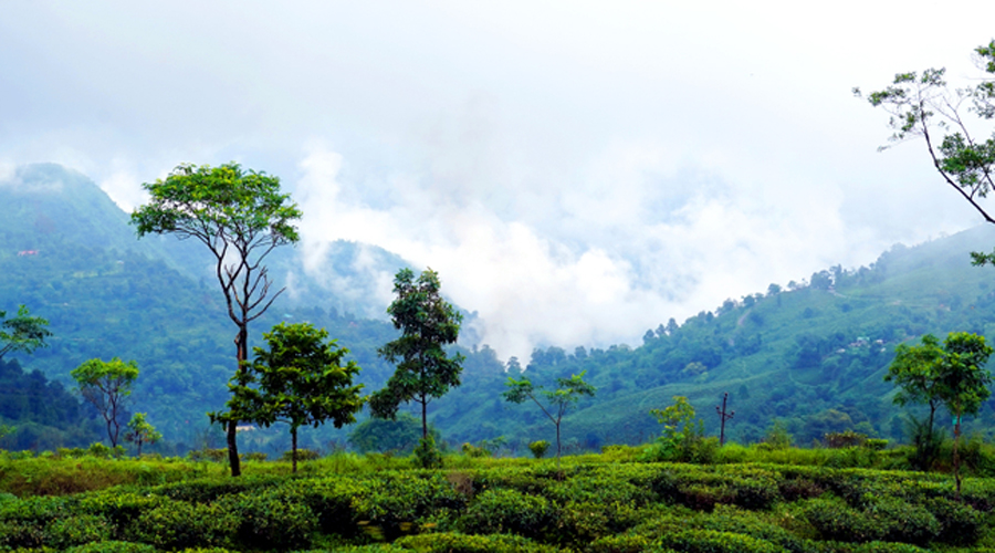 In this region, there are around 13 Assembly seats where votes of the tea population decide the fate of the candidates
