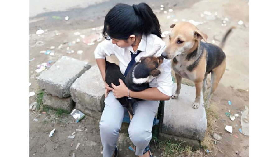 A student of The IEM Pet Society takes care of dogs around her college campus