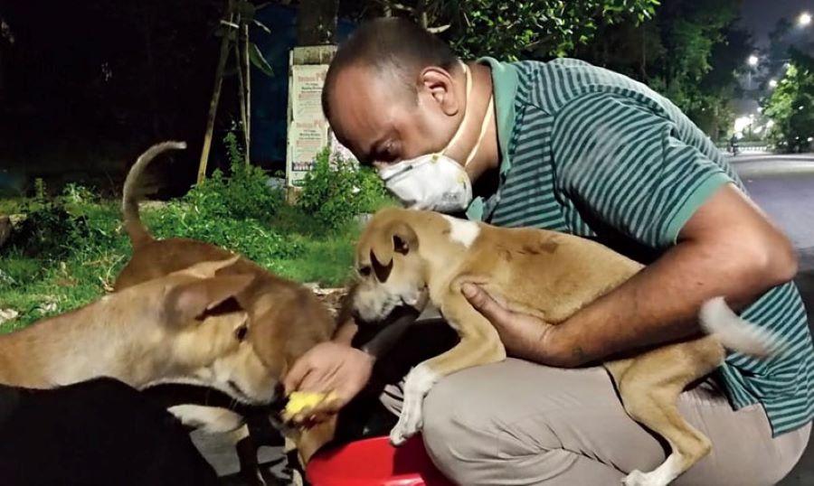 Arijit Mukherjee feeds street dogs and cats
