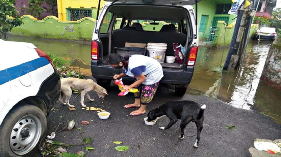 Titas Mukherjee not only feed dogs but also runs an animal shelter